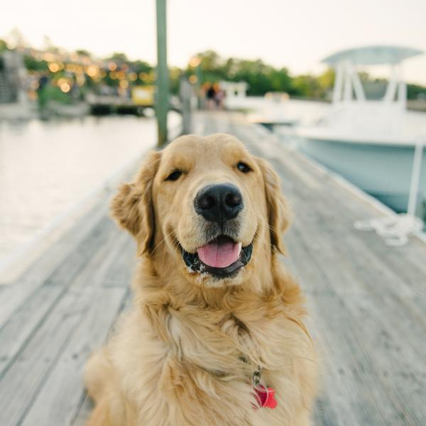 Dogs on Tybee Island