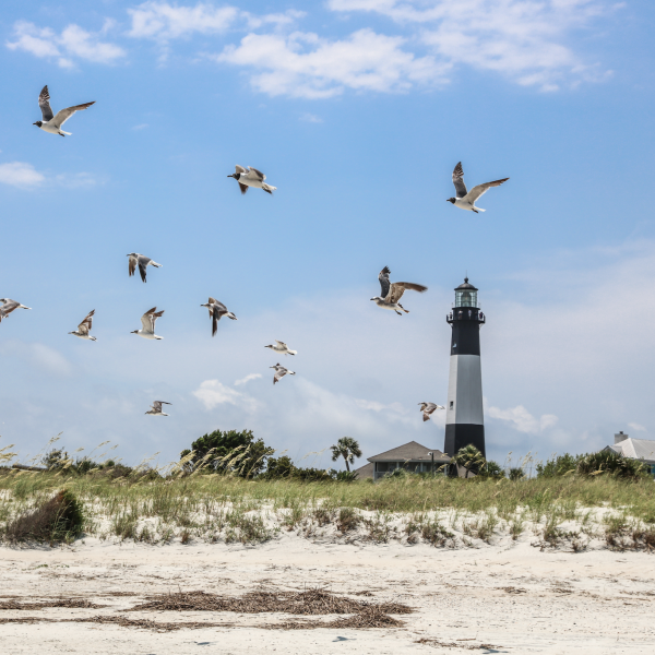 Tybee Island Lighthouse Seagulls