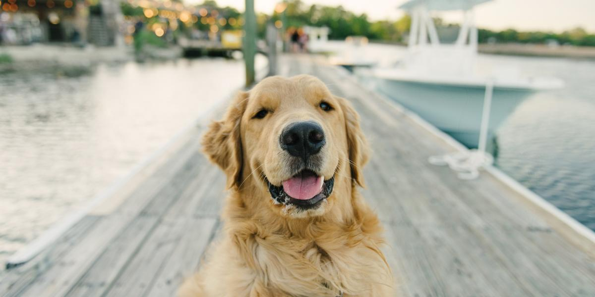 Everything You Need To Know About Bringing Dogs To Tybee Island Visit Tybee Island