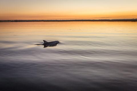 dolphin Tybee Island Georgia
