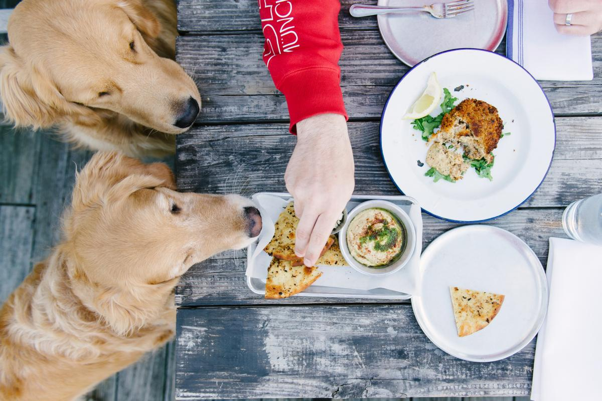 everything you need to know about bringing dogs to tybee islanddo grab some kibbles and bits \u2013 after a day of island adventures, you\u0027re sure to have worked up a big appetite luckily, tybee is home to delicious