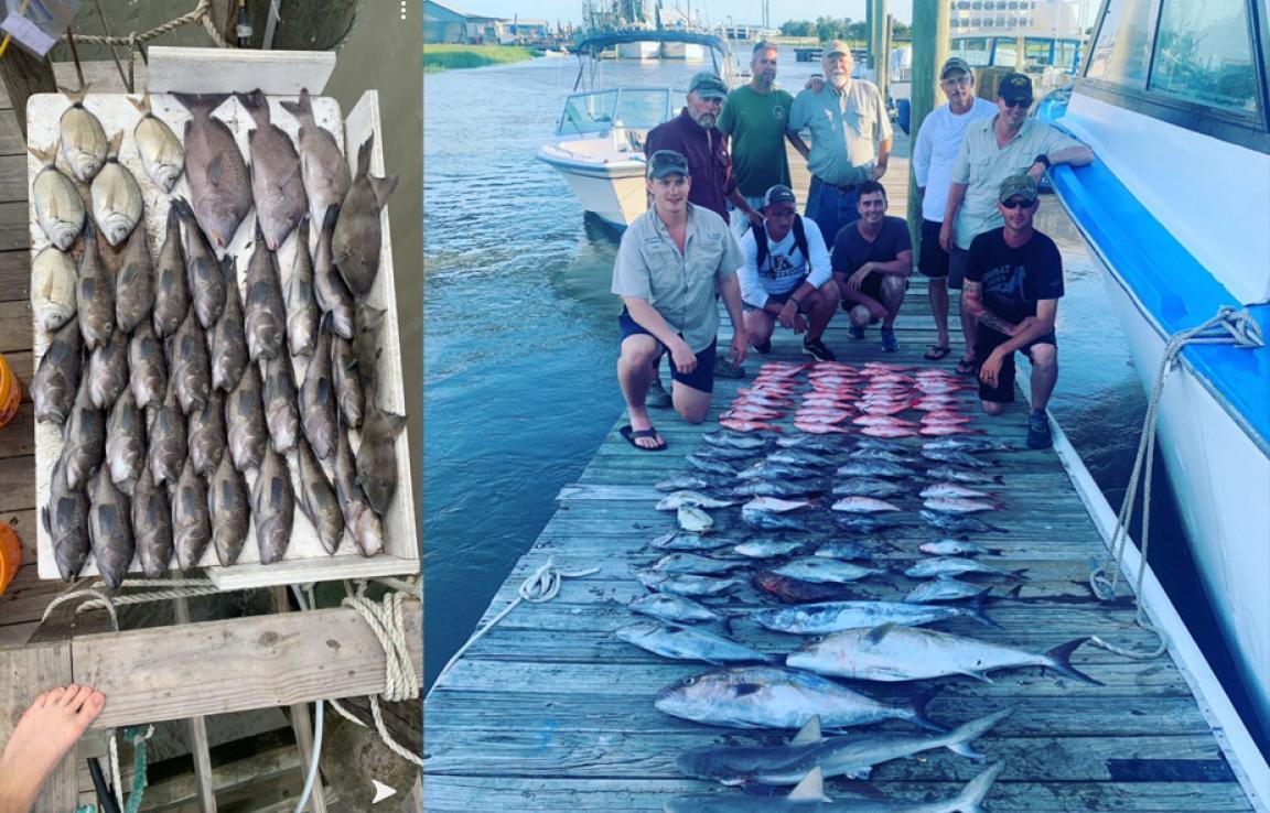 Boat Load Of Fish