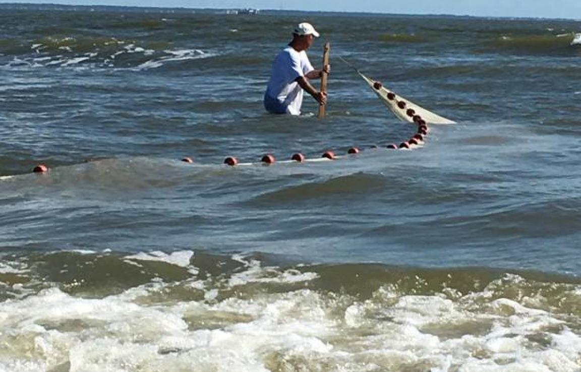 Pulling the beach seine net