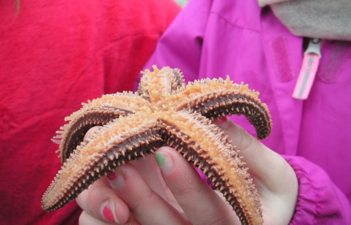 Examining a Sea Star, close up!