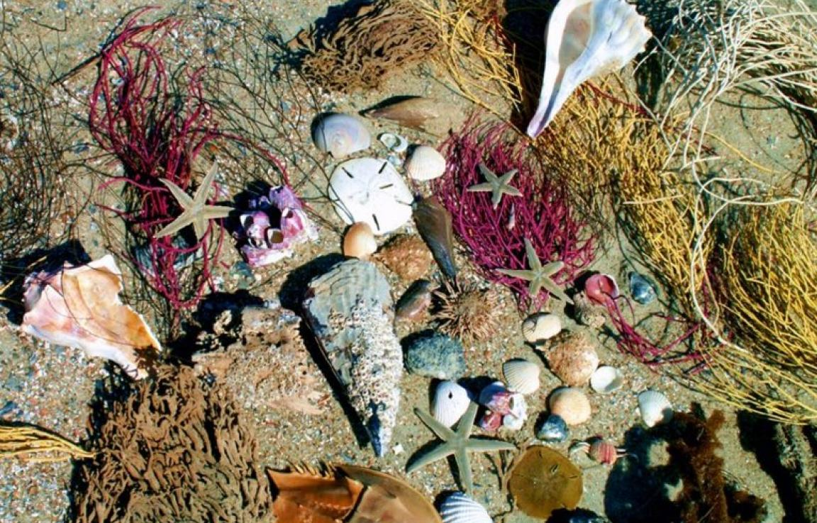 Tybee Beach Ecology Tours